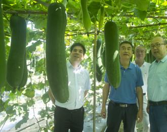 自治区农业农村厅领导检查第二届中国(广西)—东盟现代种业发展大会筹备情况
